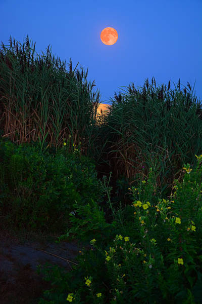Green And Gray Photograph - Supermoon 2014 -color by Lourry Legarde