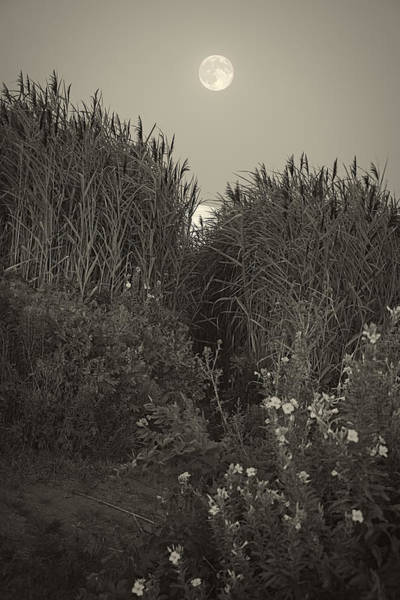 Photograph - Supermoon 2014 Monochrome by Lourry Legarde