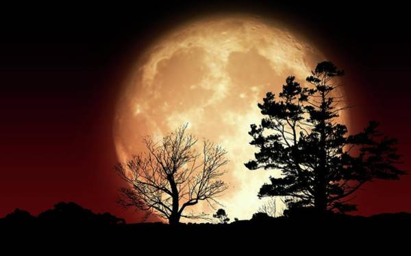 Perigee Moon Photograph - Supermoon Behind Trees by Mark Garlick/science Photo Library