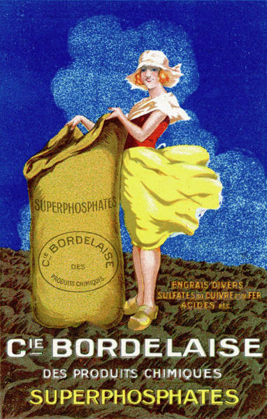 Wall Art - Drawing - Superphosphates Poster (fertiliser) by Mary Evans Picture Library