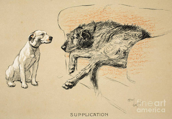 Print Drawing - Supplication by Cecil Charles Windsor Aldin