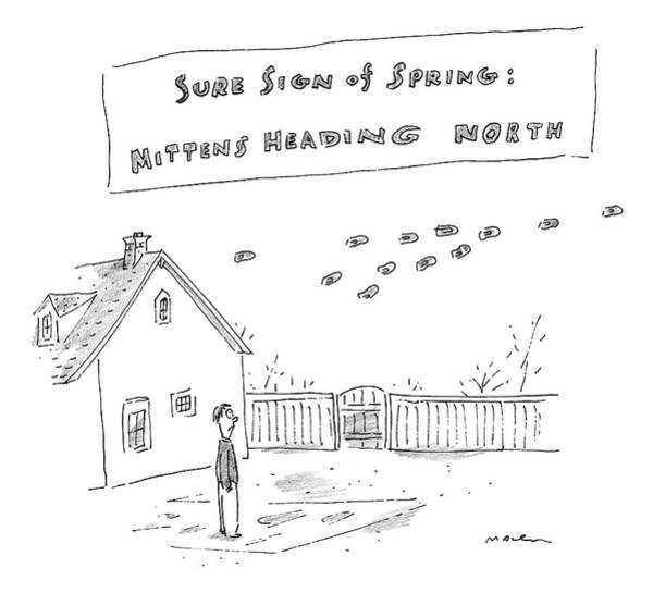 Spring Drawing - Sure Sign Of Spring: Mittens Heading North by Michael Maslin