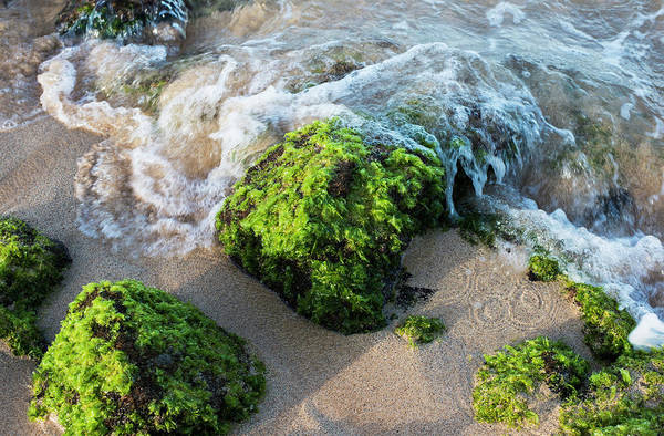Wall Art - Photograph - Surf Breaks On The Shore On Moss by Robert L. Potts