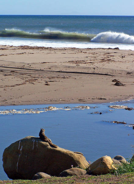 Photograph - Surf Watching Squirrel by Jennifer Robin