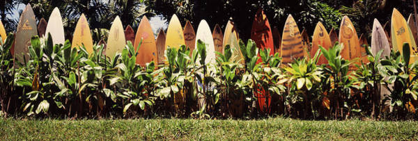 Wall Art - Photograph - Surfboard Fence In A Garden, Maui by Panoramic Images