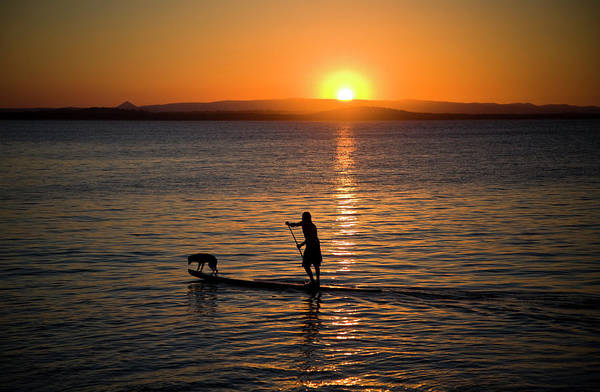 Noosa Wall Art - Photograph - Surfer And Dog On Stand Up Paddle by Andrew Peacock