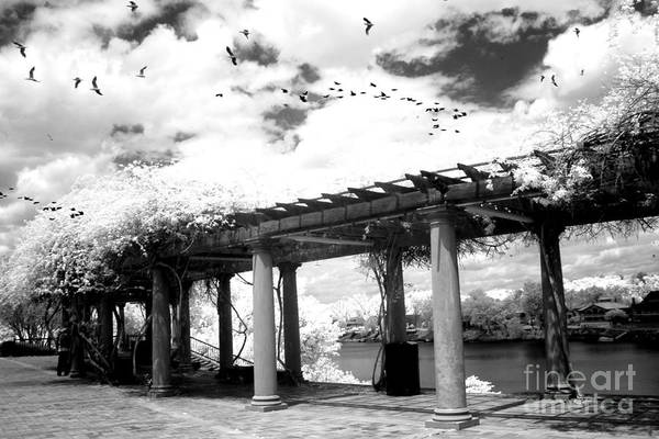 Infrared Photograph - Surreal Augusta Georgia Black And White Infrared  - Riverwalk River Front Park Garden   by Kathy Fornal