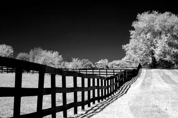 Infrared Photograph - Surreal Black White Infrared Fence Landscape by Kathy Fornal
