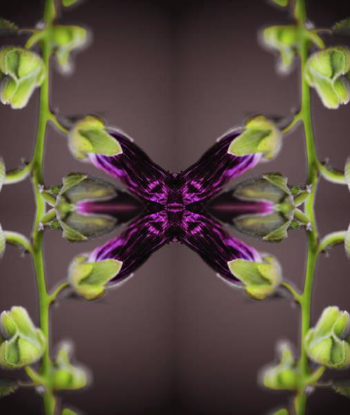 Hollyhock Photograph - Surreal Image Of Alcea Rosea by Silvia Otte