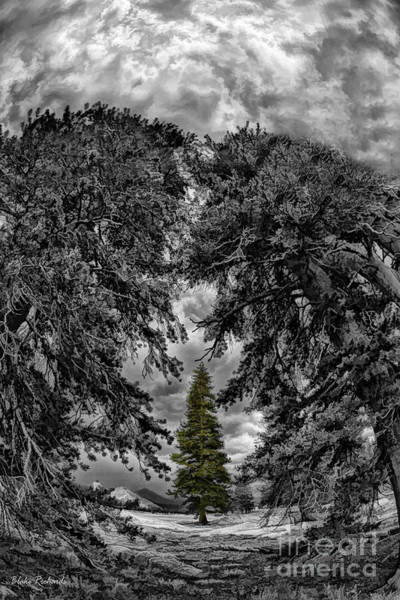 Photograph - Surrounded Green Tree by Blake Richards