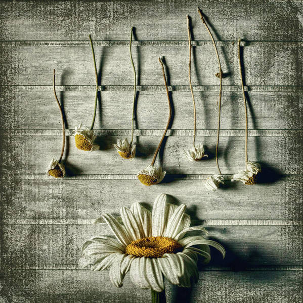 Wall Art - Photograph - Survival by Evelina Petkova