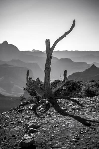Photograph - Survivor by Cat Connor