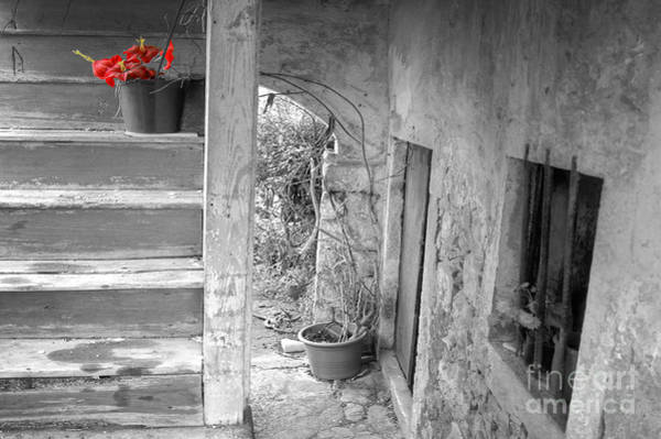 Photograph - Survivor On The Stairs by David Birchall