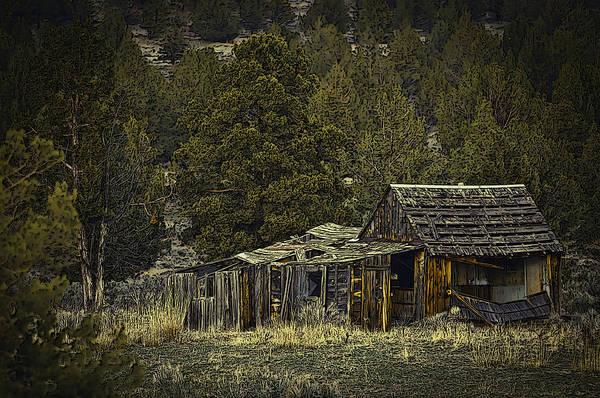 Photograph - Survivor by Sherri Meyer