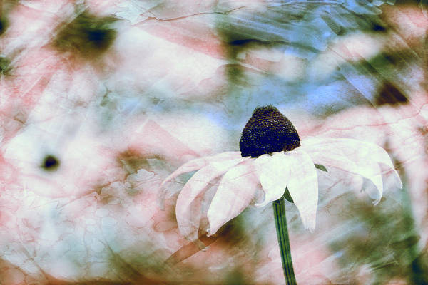 Photograph - Susan In The Garden by Peggy Collins