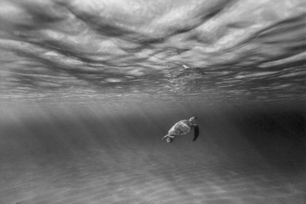 Turtle Photograph - Suspended Animation. by Sean Davey