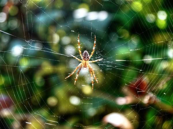 Wall Art - Photograph - Suspended Spider by Peter Mooyman