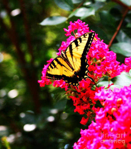 Wall Art - Photograph - Swallowtail Beauty  by Jinx Farmer
