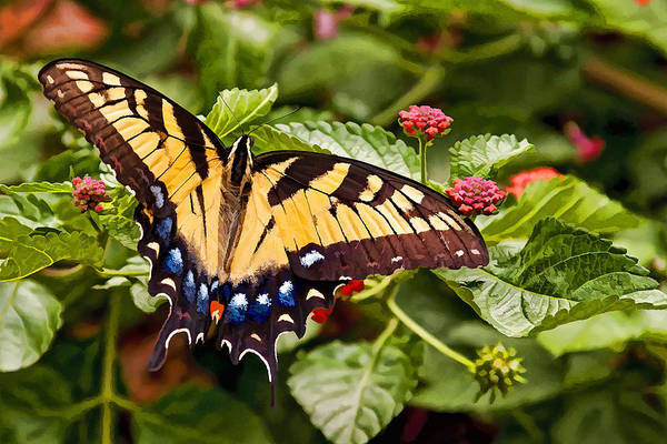 Photograph - Swallowtail Beauty by Penny Lisowski