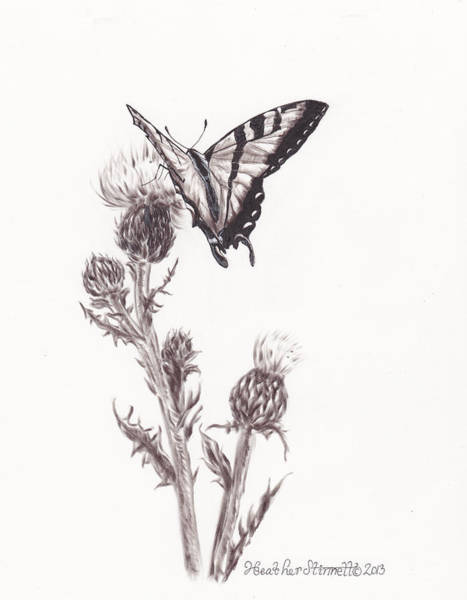 Weeds Drawing - Swallowtail Butterfly by Heather Stinnett