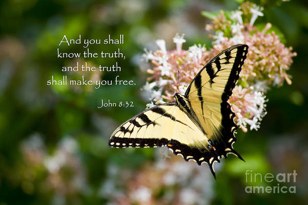 Photograph - Swallowtail Butterfly On Abelia With Scripture by Jill Lang