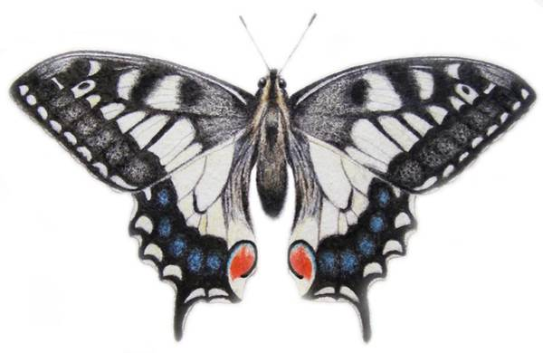 Butter Painting - Swallowtail by Ele Grafton
