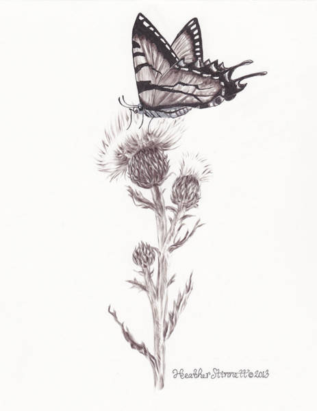 Weeds Drawing - Swallowtail  by Heather Stinnett
