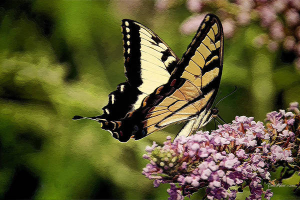 Painting - Swallowtail - Painted 267 by Ericamaxine Price
