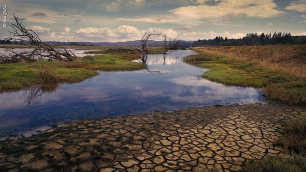 Photograph - Swamp by Alexander Fedin