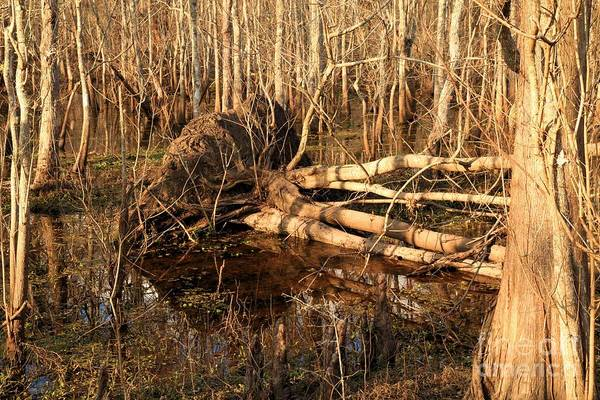 Photograph - Swamp Casualty by Adam Jewell