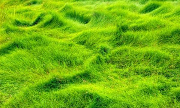 Swamp Grass Abstract Art Print