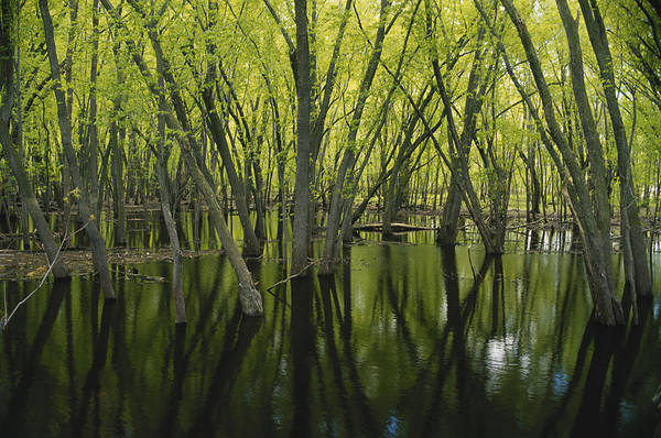 Wall Art - Photograph - Swamp In Minnesota by James Steinberg