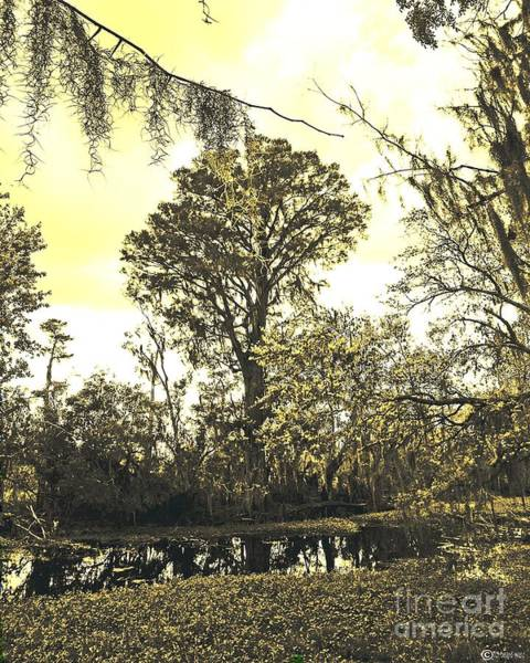 Photograph - Swamp by Lizi Beard-Ward
