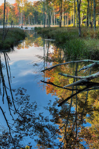 Photograph - Swamp Reflections by Bill Wakeley