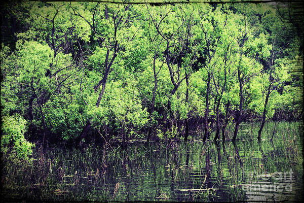 St Ignace Wall Art - Photograph - Swamp by Sophie Vigneault