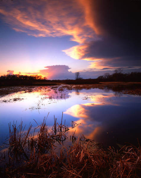 Photograph - Swamp Sunset I by Ray Mathis