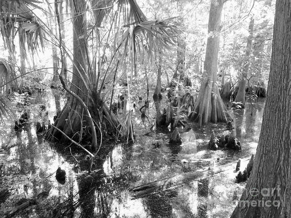 Everglades Photograph - Swampland by Carey Chen