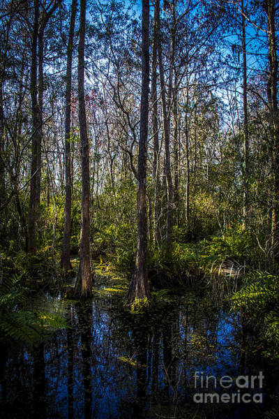 Bald Cypress Wall Art - Photograph - Swampland by Marvin Spates