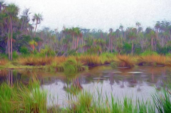 Photograph - Swampy Florida by Alice Gipson