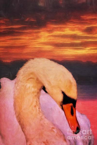 Digital Art - Swan by Angela Doelling AD DESIGN Photo and PhotoArt