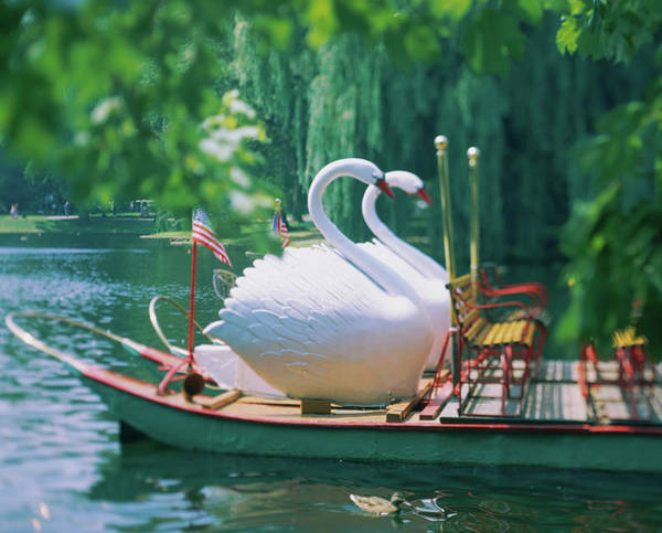 Wall Art - Photograph - Swan Boats In A Lake, Boston Common by Animal Images