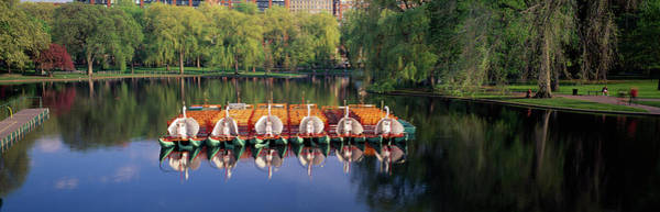 Swan Boats Photograph - Swan Boats In A Lake, Boston Common by Panoramic Images