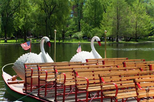 Swan Boats Photograph - Swan Boats In Boston by Paul Giamou