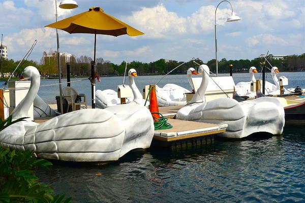 Swan Boats Photograph - Swan Boats On Lake Eola by Denise Mazzocco