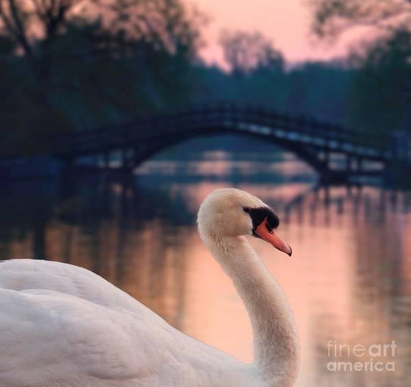 Wall Art - Photograph - Swan Bridge by Henry Kowalski