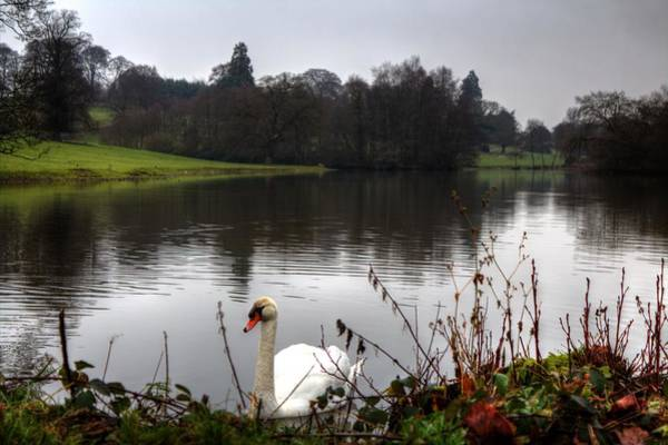 Wall Art - Photograph - Swan by Chris Whittle