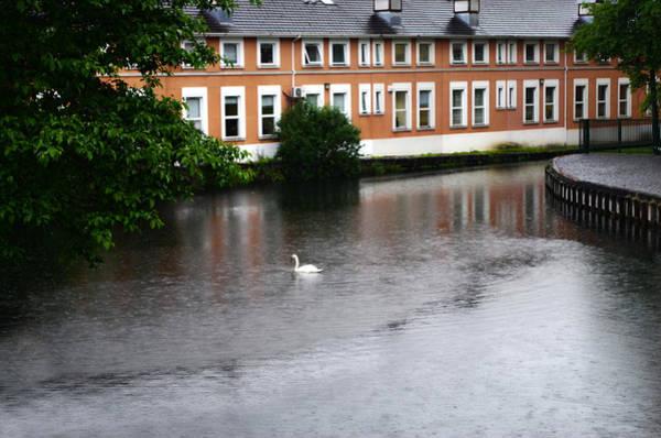 Photograph - Swan In Dublin by Sharon Popek