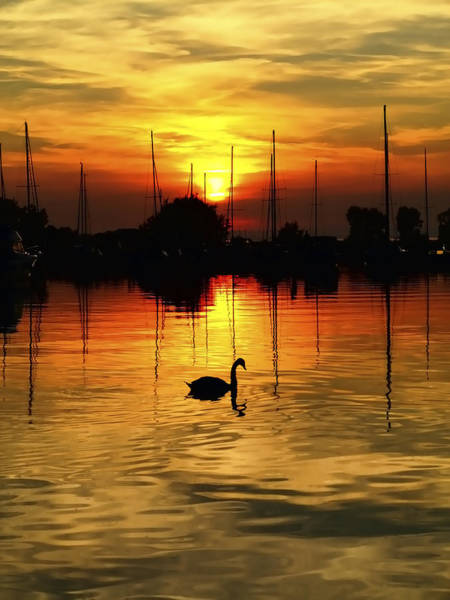 Swan Boats Photograph - Swan In The Sunset by Kim Shatwell-Irishphotographer