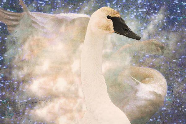 Migratory Photograph - Swan Journey by Kathy Bassett