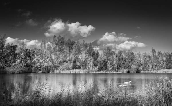 Photograph - Swan Lake by Gary Gillette